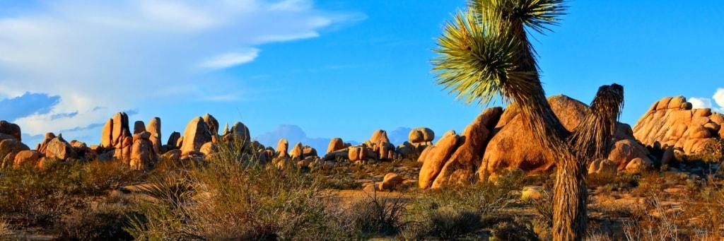 Blog - Palm Desert CA - Joshua Tree National Park - JeniFoto (Shutterstock 432435106) 1024x341-min